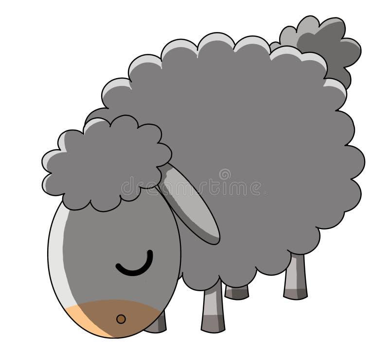 предпосылка пася белизну овец Стоковое фото RF
