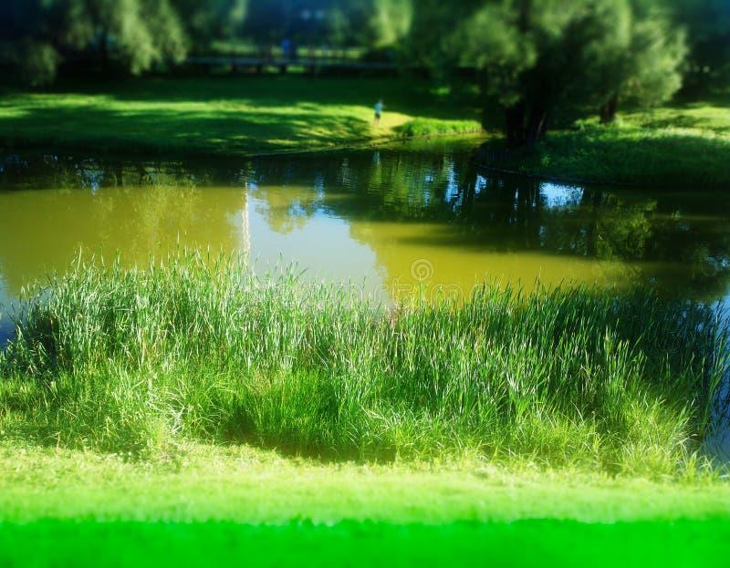 Предпосылка подпора пруда парка лета стоковое изображение rf