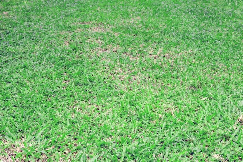 Предпосылка пола Sward, зеленая картина листьев стоковые фотографии rf