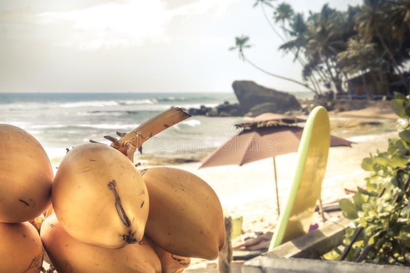Предпосылка праздников летних каникулов пляжа с доской прибоя пальм кокосов и море как занимаясь серфингом образ жизни стоковое изображение rf