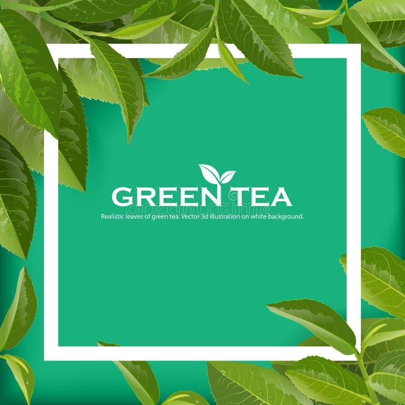 Предпосылка природы вектора листьев зеленого чая бесплатная иллюстрация