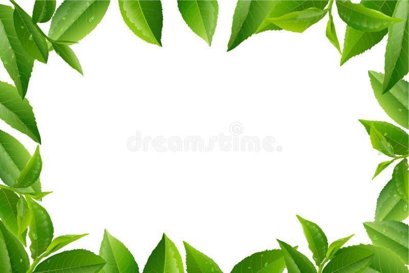 Предпосылка природы вектора листьев зеленого чая иллюстрация вектора