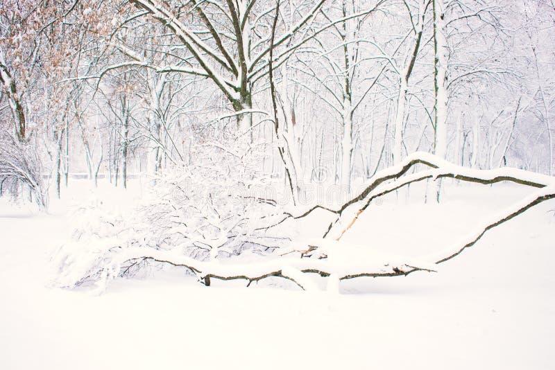 Предпосылка природы зимы, ландшафт Лес зимы, парк со снежными упаденными деревьями Плохая погода зимы, шторм, вьюга, смещения сне стоковая фотография