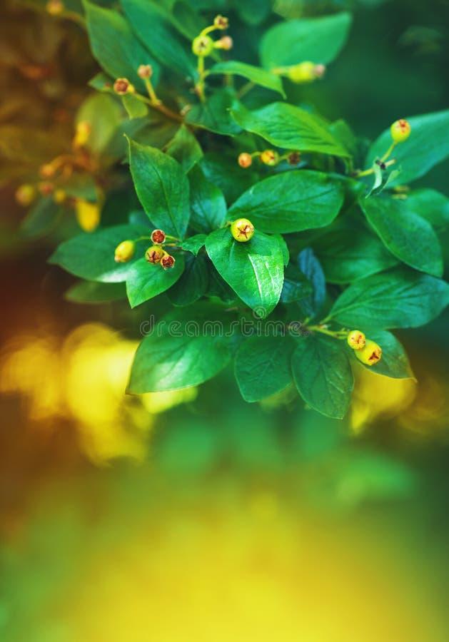 Предпосылка природы с ветвью дерева и зелеными листьями стоковые фотографии rf