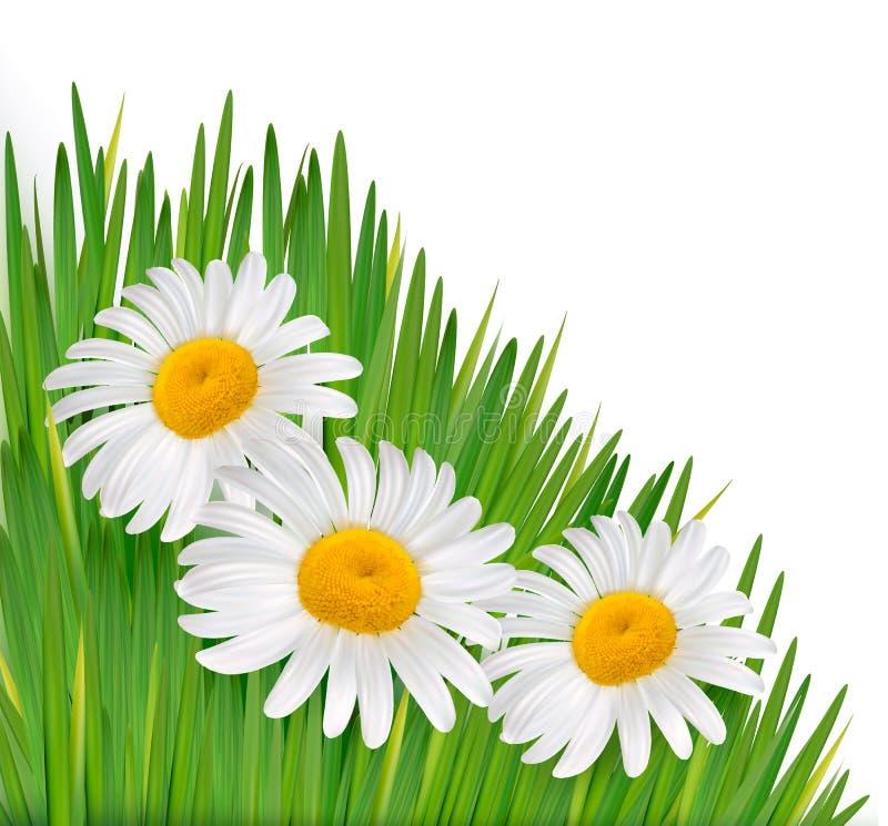 Предпосылка природы с красивейшими цветками. иллюстрация вектора
