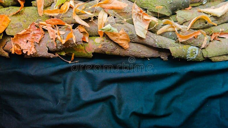 Предпосылка природы с листьями и корой дерева стоковая фотография