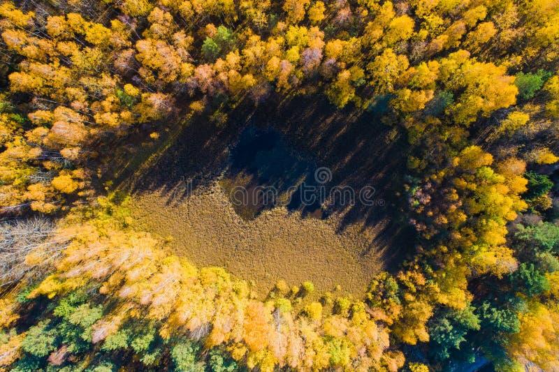 Предпосылка пущи осени сельский пейзаж Природа падения Воздушный красочный ландшафт Желтый лес осени сверху стоковое фото
