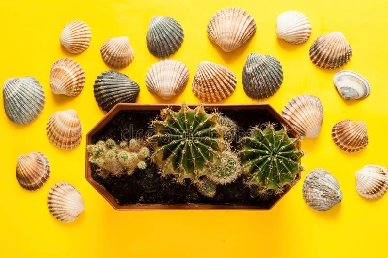 Предпосылка раковин моря и малых кактусов Концепция морского воссоздания, крупного плана, космоса экземпляра стоковая фотография rf