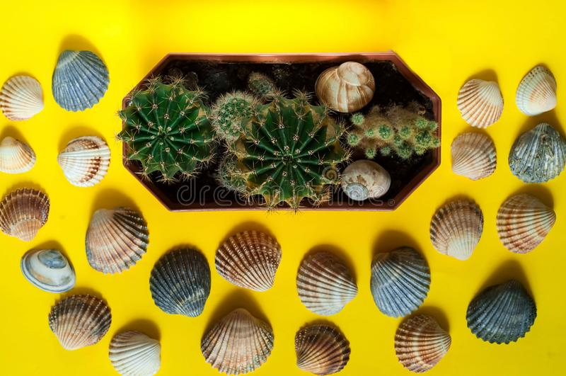 Предпосылка раковин моря и малых кактусов Концепция морского воссоздания Модные яркие цвета Плоское положение, крупный план, косм стоковые изображения rf