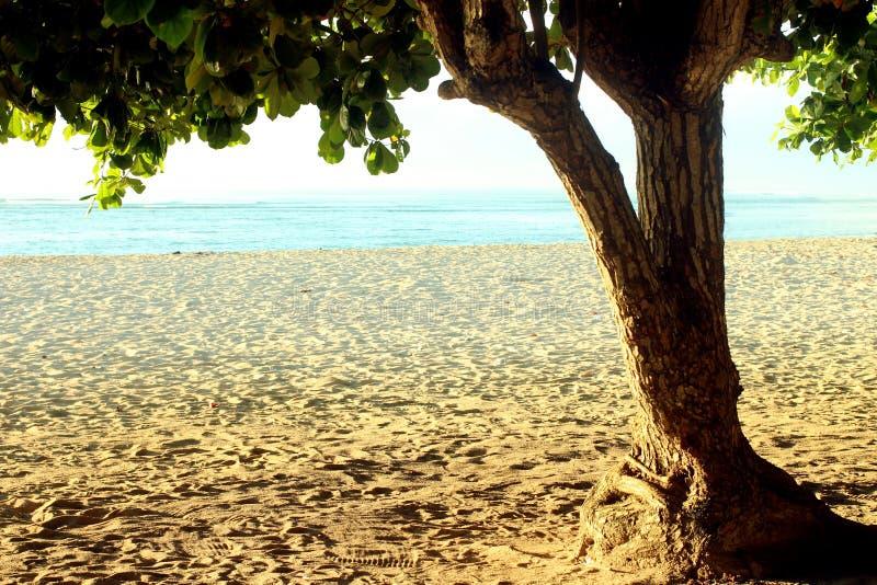Предпосылка рамки дерева пляжа с белой предпосылкой песчаного пляжа и вида на океан на времени дня стоковое изображение rf