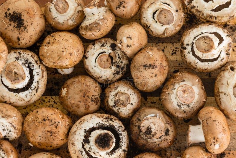 Предпосылка составленная множественных размеров грибов стоковые фото