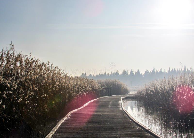 Предпосылка с деревянной дорожкой пути на береге озера на спокойном спокойном утре зимы Пристань hoar Frost деревянная стоковые изображения