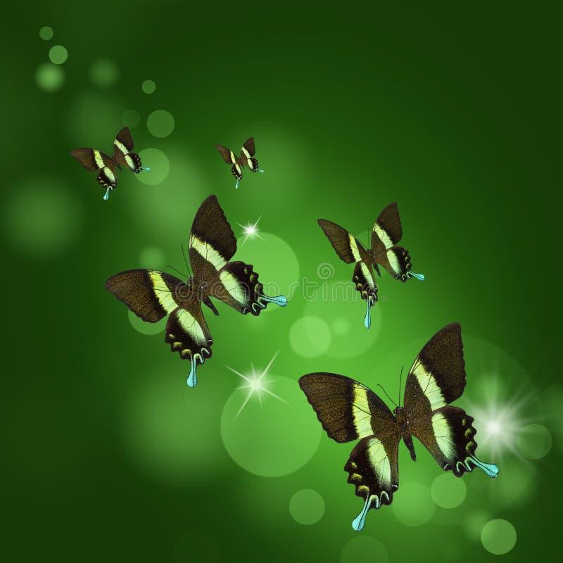 Предпосылка с тропическими бабочками стоковая фотография rf