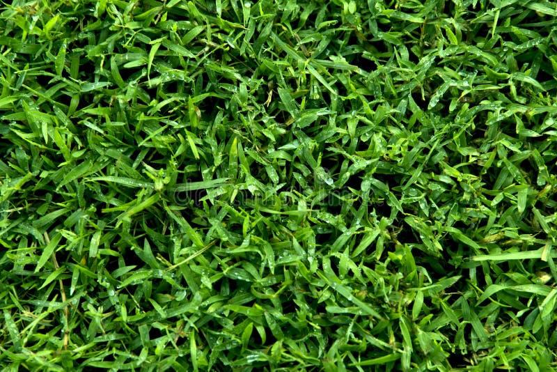 Предпосылка, текстура зеленой травы стоковые изображения rf