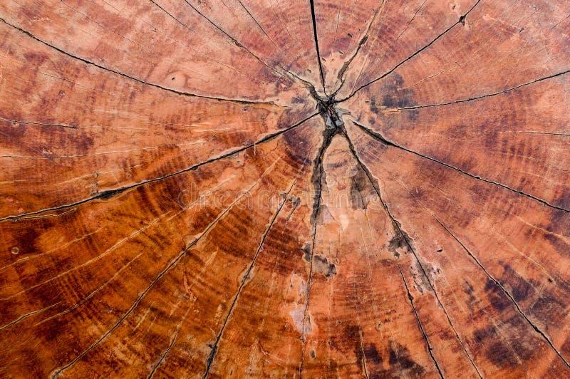 Предпосылка текстуры колец дерева старая деревянная стоковая фотография rf