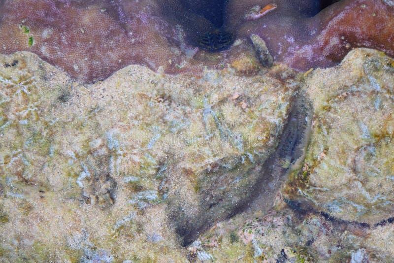 Предпосылка текстуры конспекта естественная подводная - кривые и дизайны на камнях и кораллах стоковое фото rf