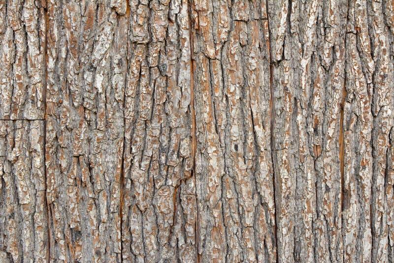 Предпосылка текстуры планки коры дерева Брауна деревянная стоковые фотографии rf