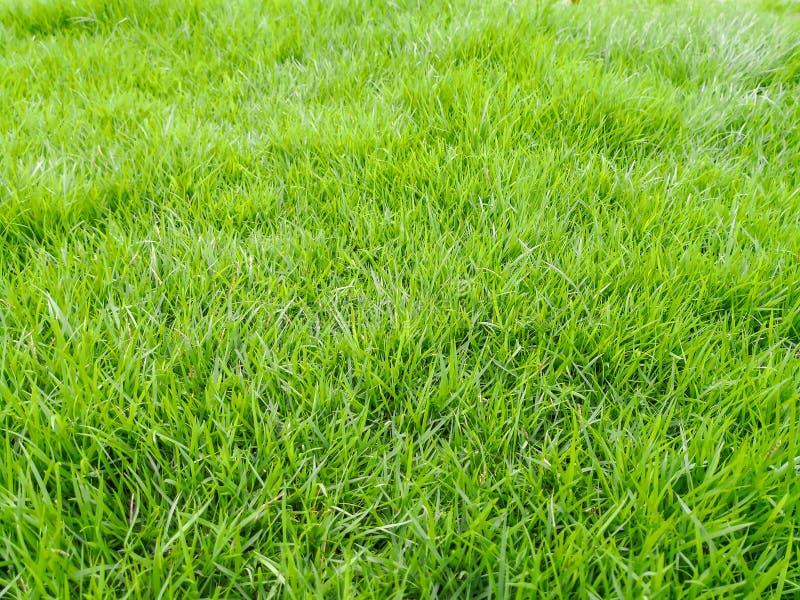Предпосылка текстуры поля зеленой травы стоковое фото rf