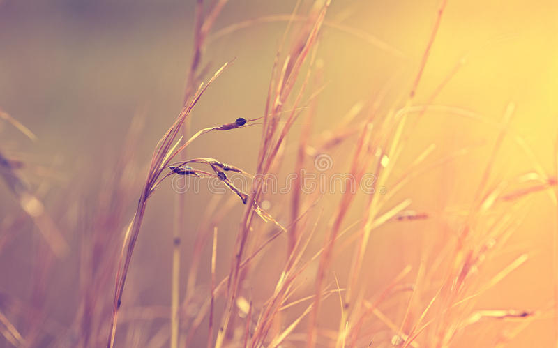 Предпосылка травы абстрактная стоковое изображение rf