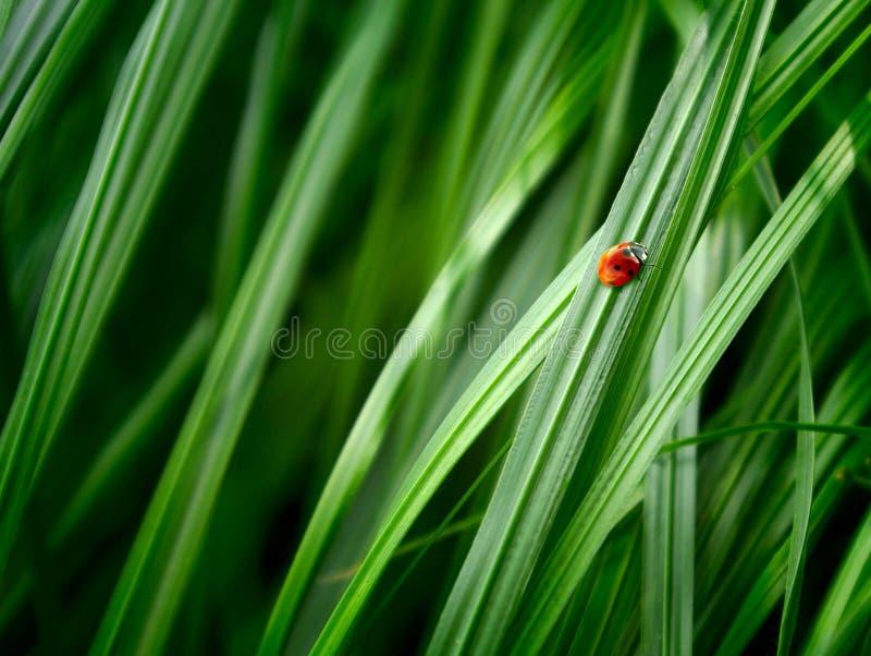 Предпосылка травы стоковые фотографии rf