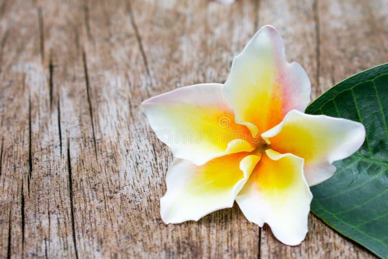 Предпосылка тропического цветка Frangipani старая деревянная стоковое фото
