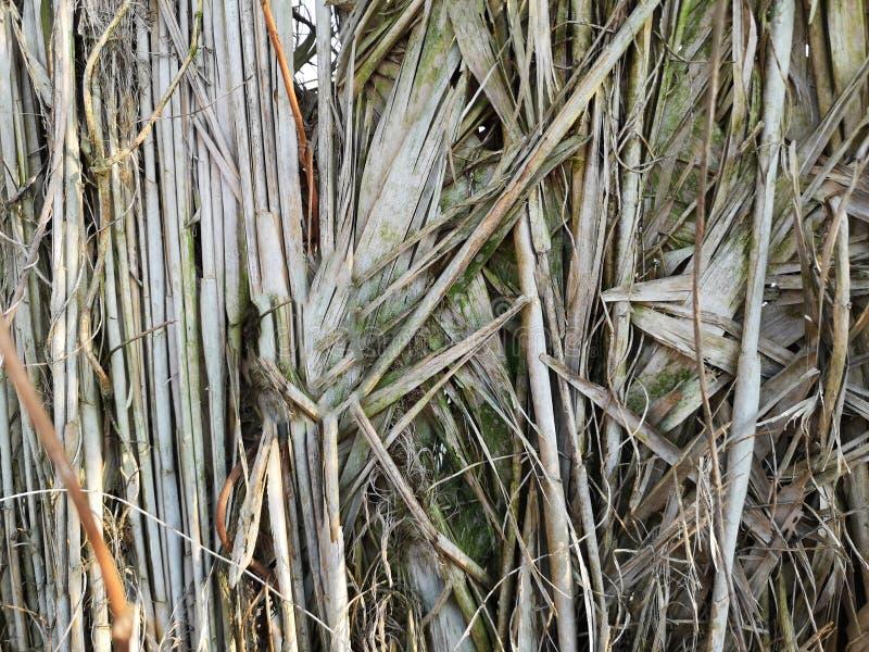 Предпосылка тростников болота стоковые фото