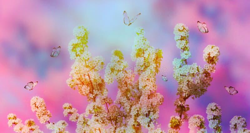 Предпосылка цветения весны Красивая сцена природы с зацветая деревом и солнце flare день солнечный just rained Красивый сад стоковые фотографии rf
