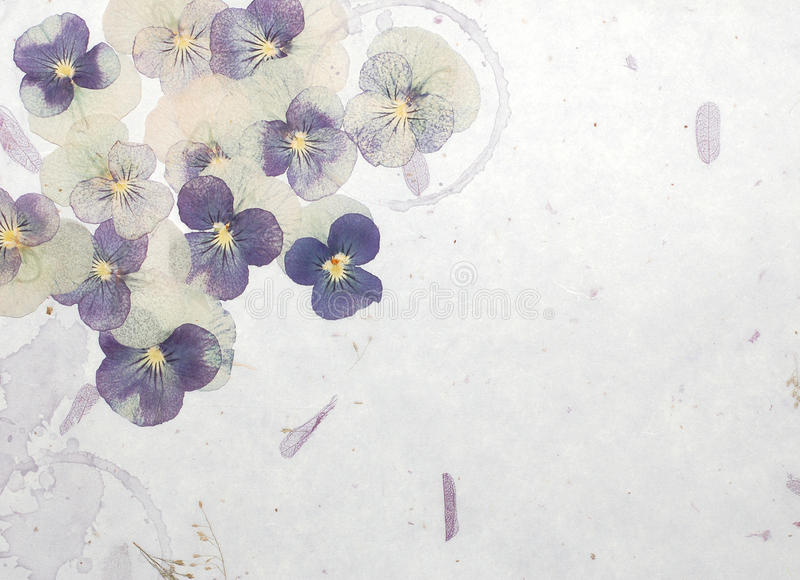 предпосылка цветет пастель стоковые фотографии rf