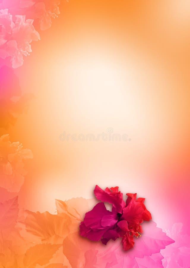 предпосылка цветет померанцовый пинк стоковые изображения