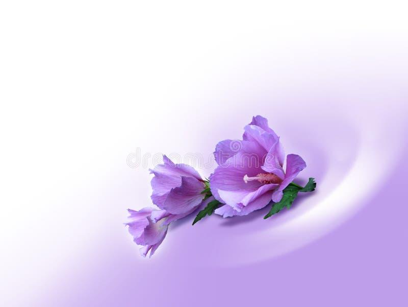 предпосылка цветет фиолет иллюстрация вектора