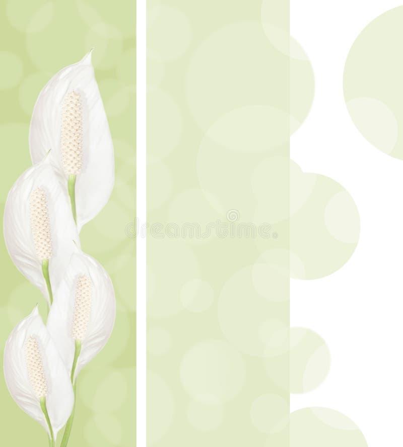 предпосылка цветет spathiphyllum стоковые изображения