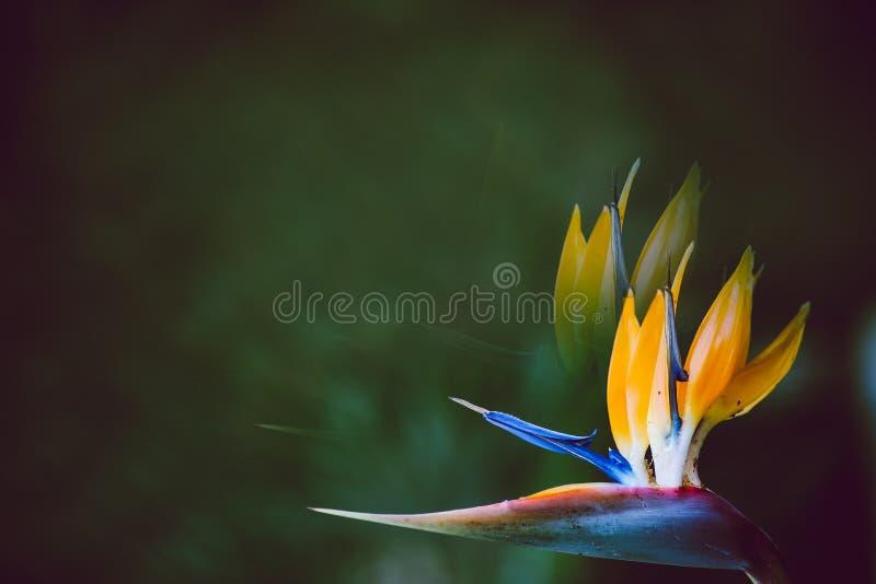 Предпосылка цветка крана лета blossoming, селективный фокус, отрицательный космос стоковая фотография