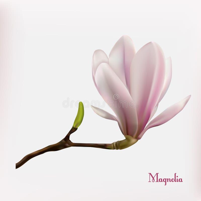 Предпосылка цветка магнолии бесплатная иллюстрация