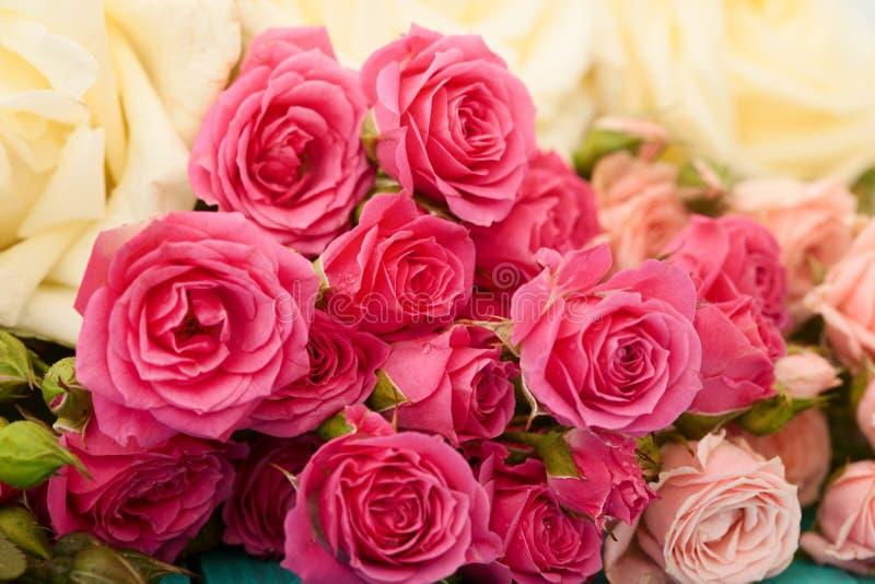 Предпосылка цветка роз Селективный фокус Розовый и белый макрос поднял День валентинки и матери лестницы портрета платья принципи стоковое изображение