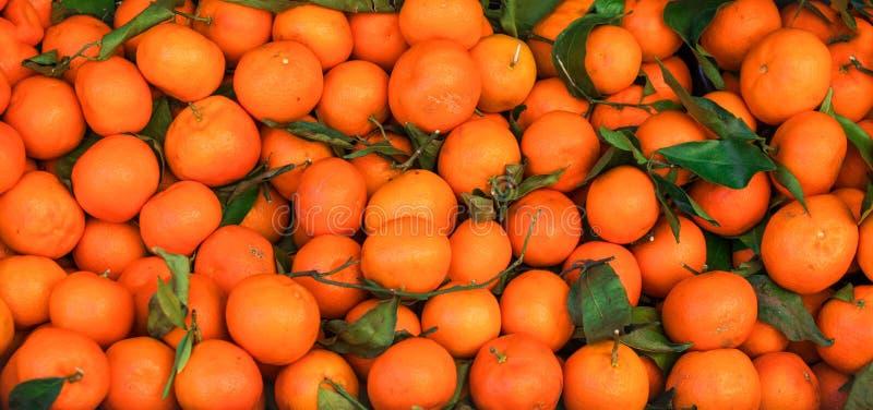 Предпосылка цитрусовых фруктов Свежие мандарины Tangerines, clementin стоковое изображение