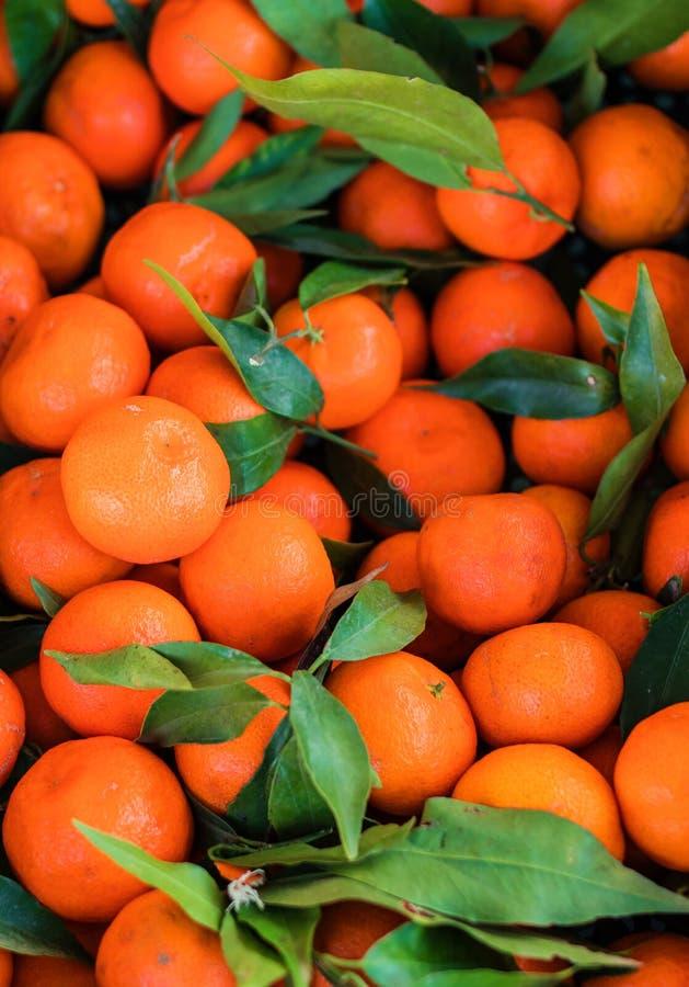 Предпосылка цитрусовых фруктов Свежие мандарины Tangerines, clementin стоковые изображения rf