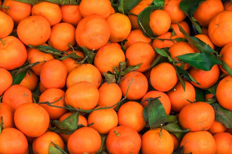 Предпосылка цитрусовых фруктов Свежие мандарины Tangerines, clementin стоковое изображение rf