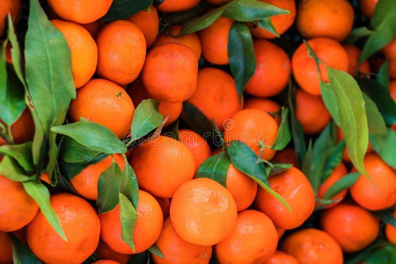 Предпосылка цитрусовых фруктов Свежие мандарины Tangerines, clementin стоковые фото