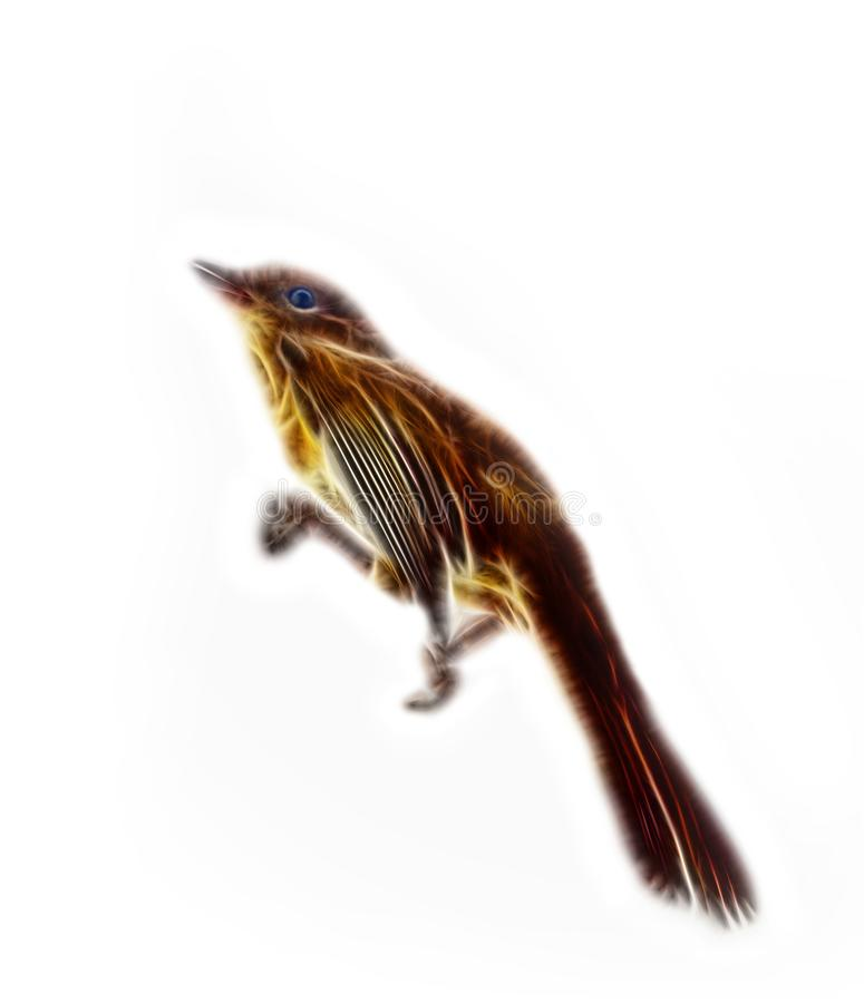 Предпосылка Черно-крышки птицы белая, животная картина стоковые фотографии rf