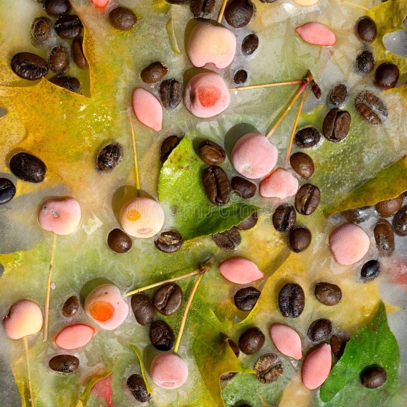 Предпосылка черных кофейных зерен, красного небольшого яблока, ягоды goji и желтых листьев клена, который замерли во льду стоковое изображение