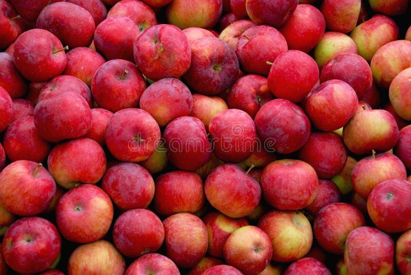предпосылка яблок стоковое фото rf