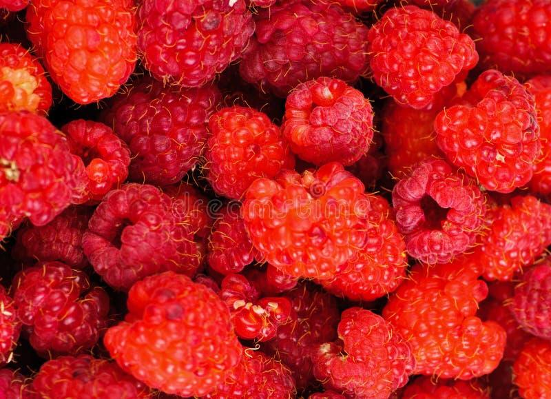 предпосылка rasberry стоковая фотография
