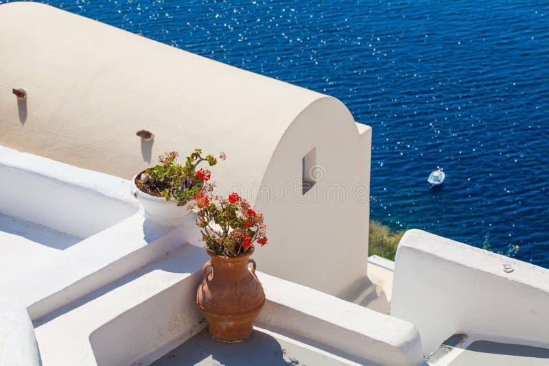Предпосылка Santorini с цветками и Белыми Домами Santorini, Греция стоковые фотографии rf