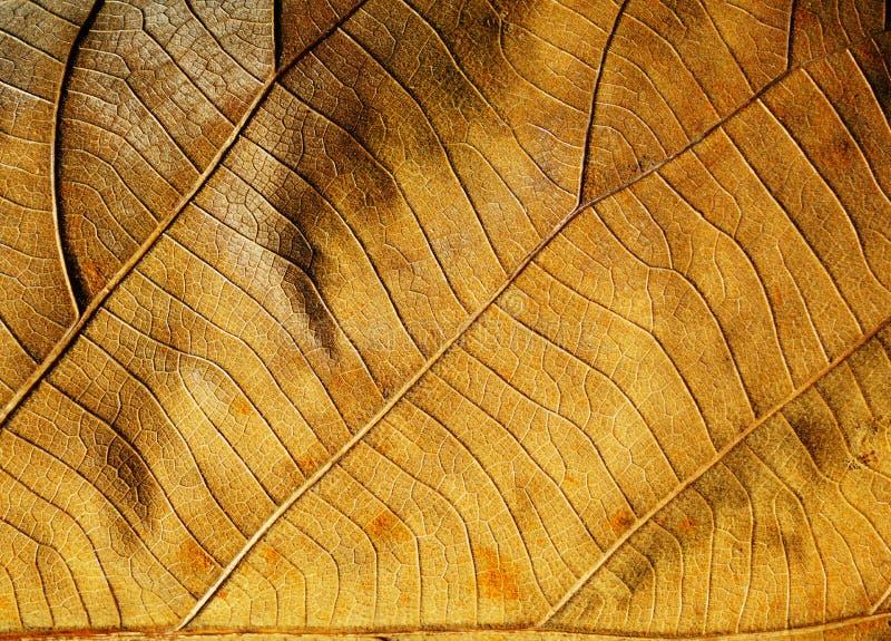 предпосылки сушат текстуру листьев стоковое изображение