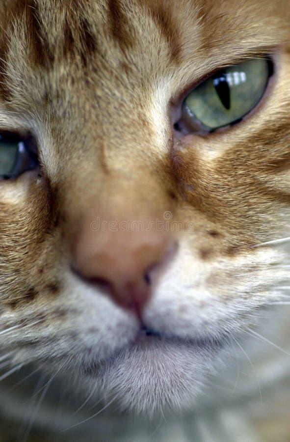 Download представление киски стоковое изображение. изображение насчитывающей глаза - 76443