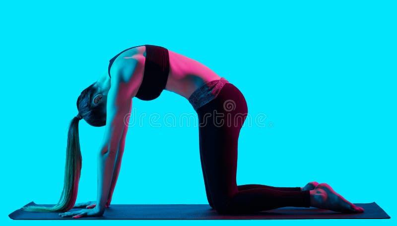 Представление кота Bidalasana exercices йоги женщины стоковые изображения