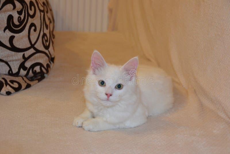 Представления котенка стоковые фото