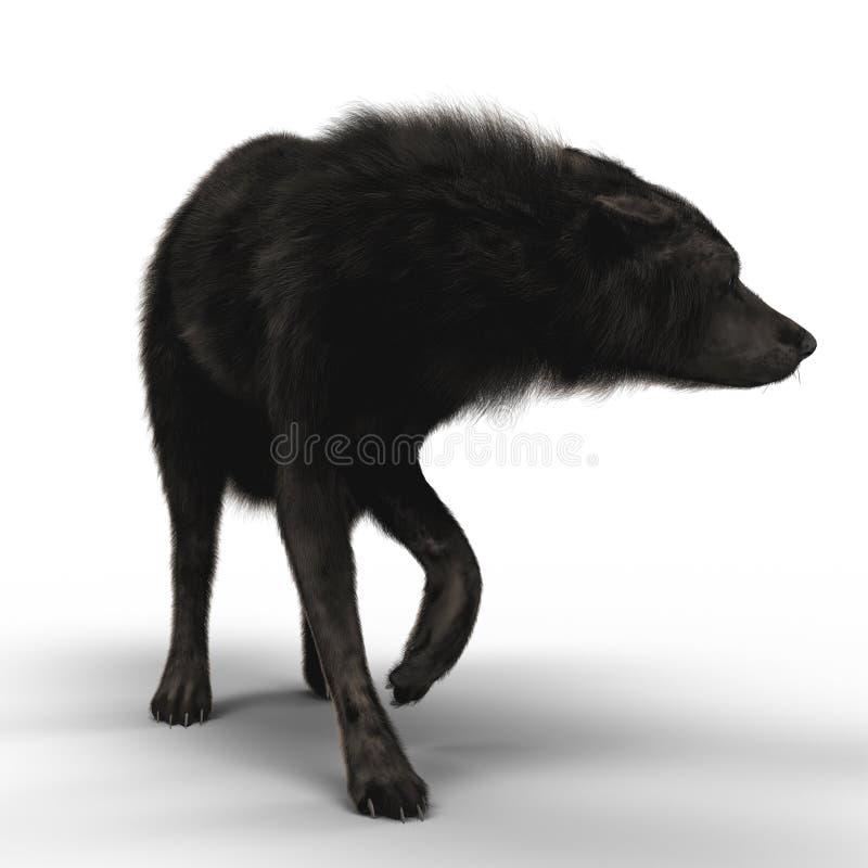 Представлять черного волка сжимаясь бесплатная иллюстрация