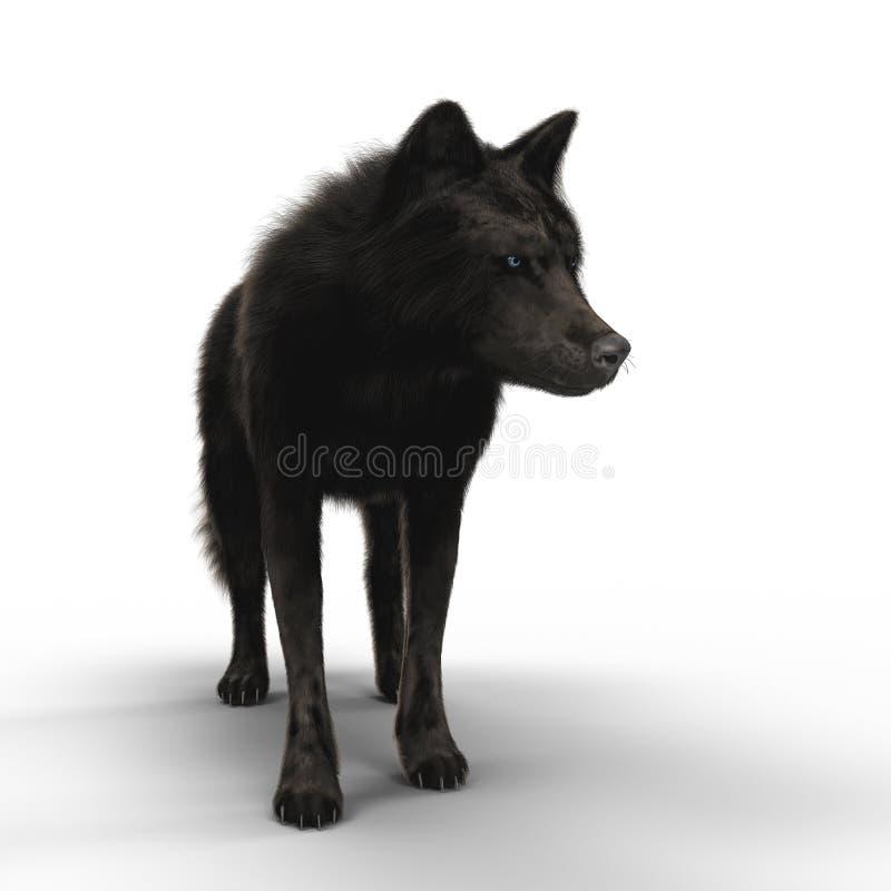 Представлять черное положение волка иллюстрация штока