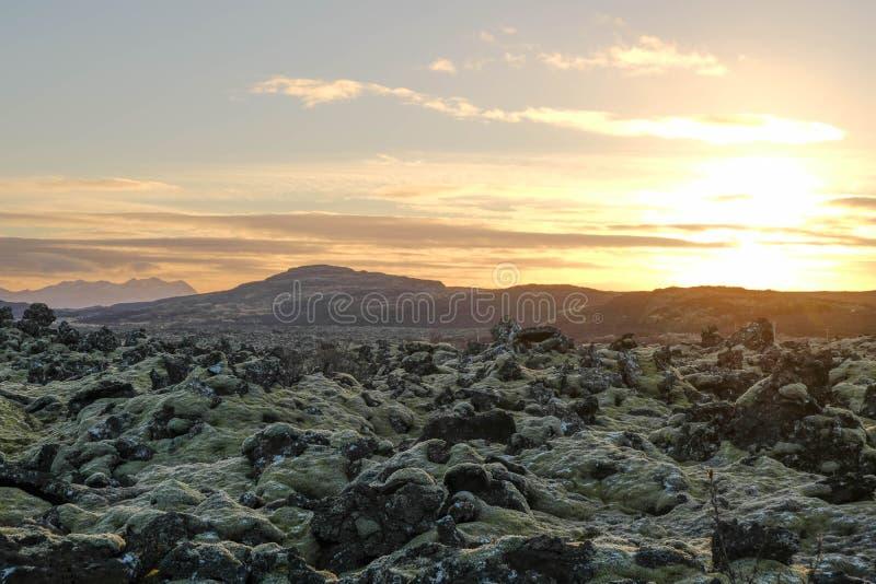 Предусматрива поля утеса лавы с мхом и заходом солнца предпосылки папоротника и горы стоковые изображения rf
